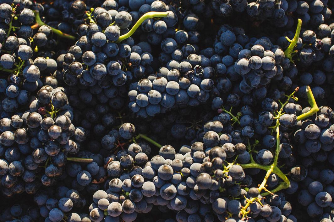 uvas grapes - Camino Mitad