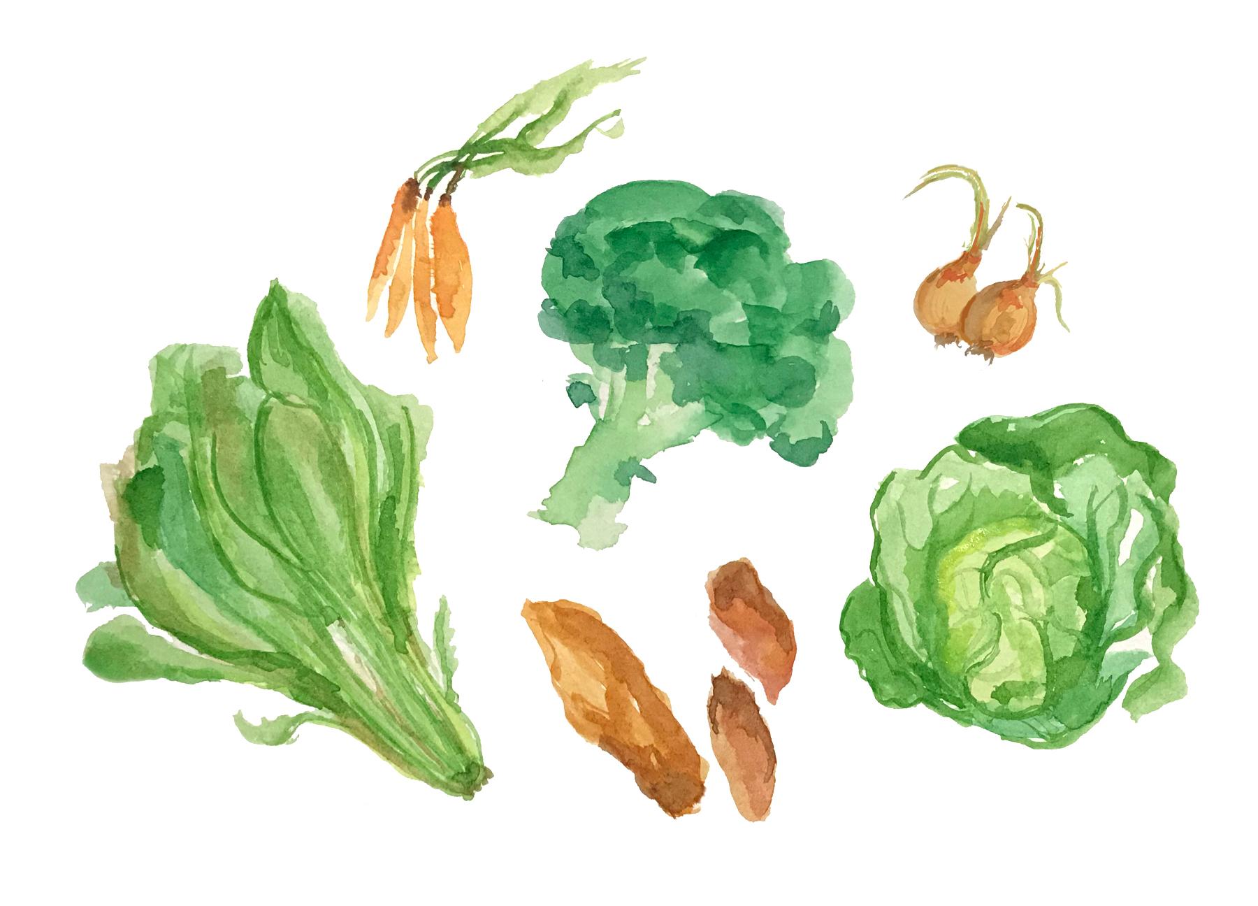 Verduras de invierno Azagra Navarra