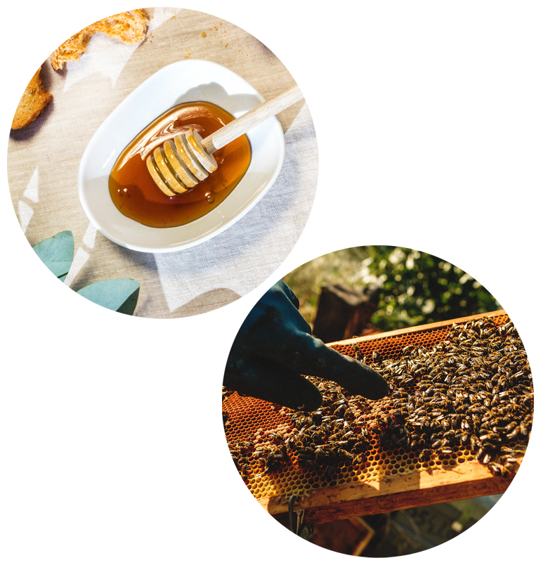 Honey in Spain and its benefits Handcrafted